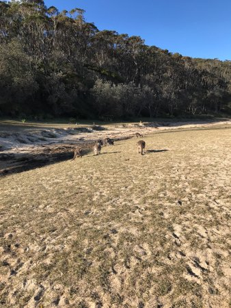Shoalhaven, Australia: photo0.jpg