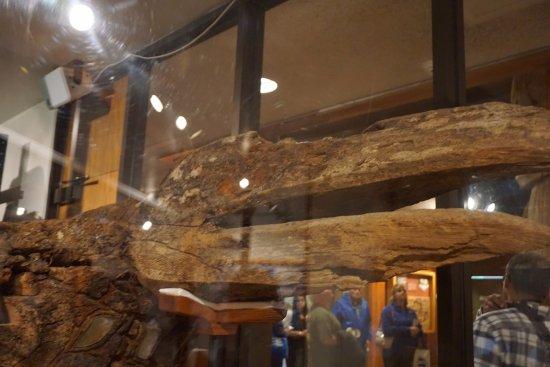 Totem Heritage Center : grand totem