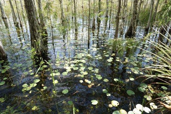 Garl's Coastal Kayaking Everglades : photo0.jpg