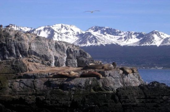 Beagle Channel Yacht Sailing Tour fra...