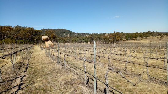 Balancing Rock Wines