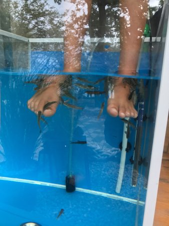 Fish pedicure njivice all you need to know before you go for Fish pedicure price