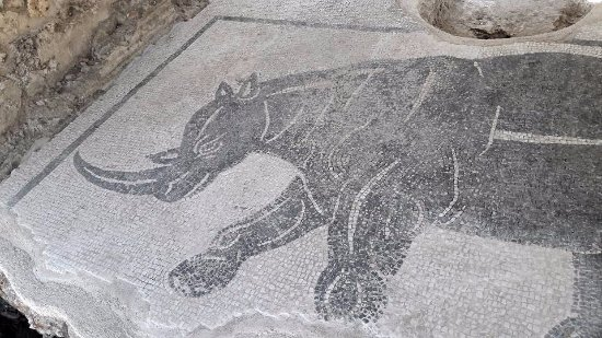 Aquinum Sito Archeologico: Mosaico pavimentale