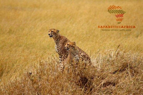 Safari Bike Africa