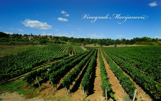 Winery Marijanovic