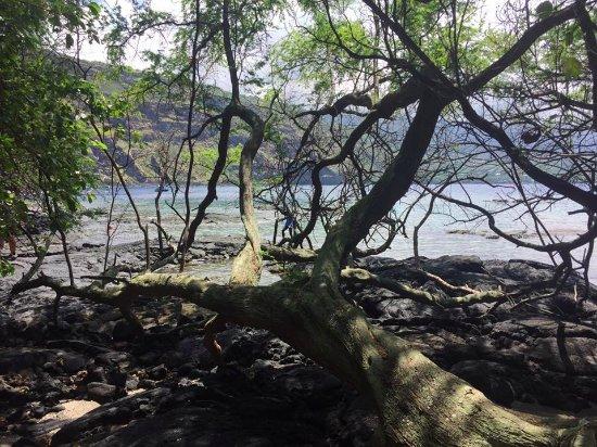 Kealakekua Bay : Baie près du monument du Capitaine Cook. Arrivée du trail.
