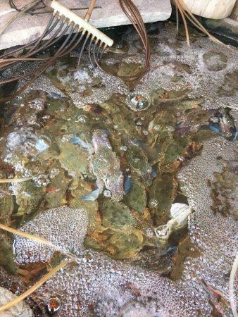 Holy Crab: photo0.jpg