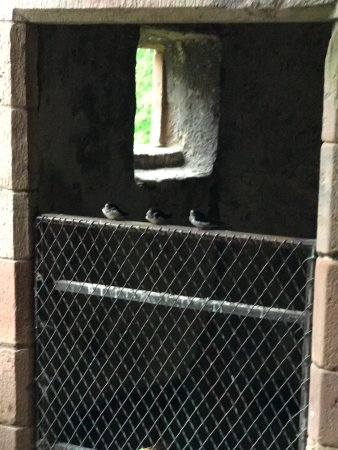 ‪‪Huntly‬, UK: Three baby birds waiting for food. Huntly Castle‬
