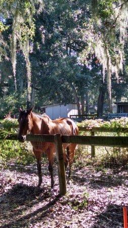 Hilton Ocala: Neighboring horse, borders on hotel property