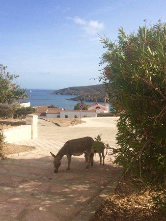 Asinara صورة فوتوغرافية