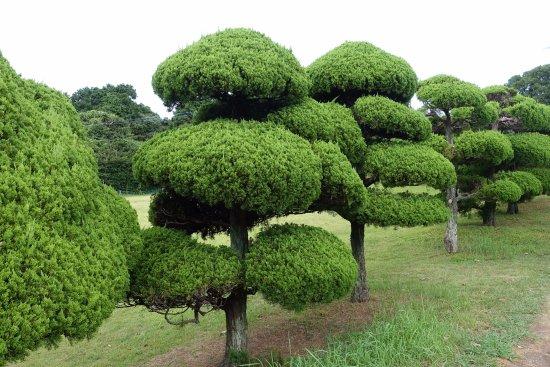 Nokonoshima Island: 庭園和風滿滿