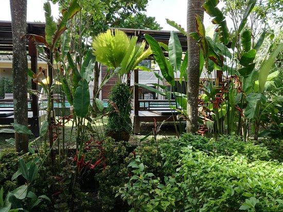 Chongfah Beach Resort: IMG_20170829_050849_large.jpg
