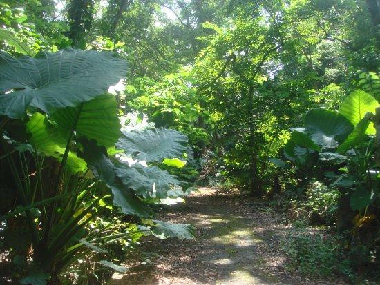 Gujifong Park