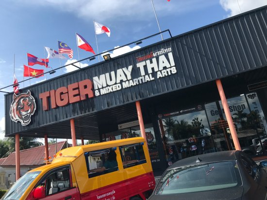 Tiger Muay Thai - Day Classes: tiger muay thai.