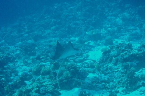 Werner Lau Diving Center Sharm el Sheikh: photo6.jpg