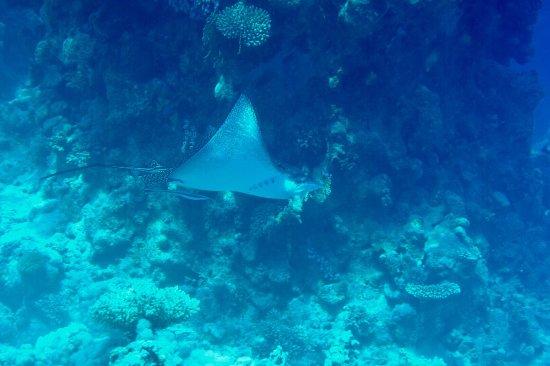 Werner Lau Diving Center Sharm el Sheikh: photo7.jpg