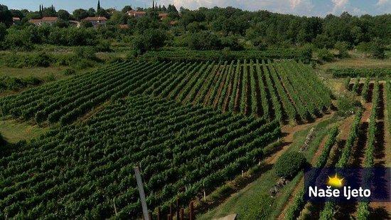 Citluk, Bosna Hersek: Vineyard