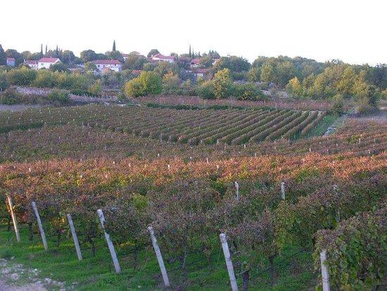 Citluk, Bosna Hersek: Autumn in the vineyards