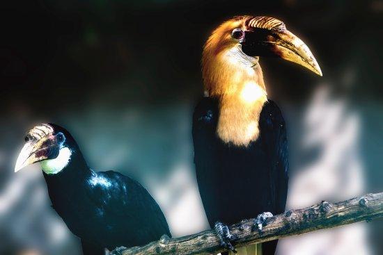Filby, UK: Toucan - Thrigby Hall Wildlife Gardens