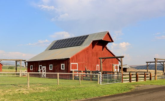 Barking Mad Farm & Country B&B: Century old barn on the farm...
