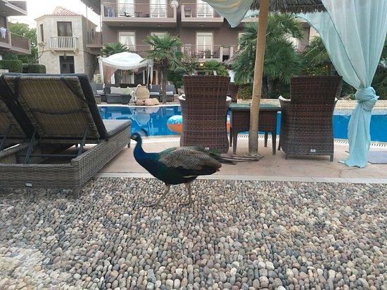 Achtis Hotel: photo2.jpg