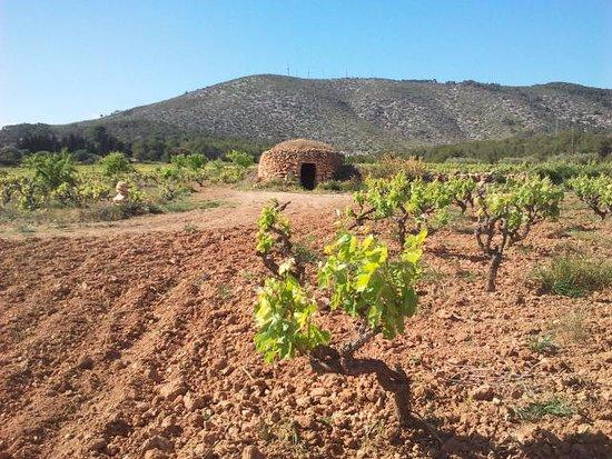Sant Pere de Ribes, España: El Montgròs: MUlassa