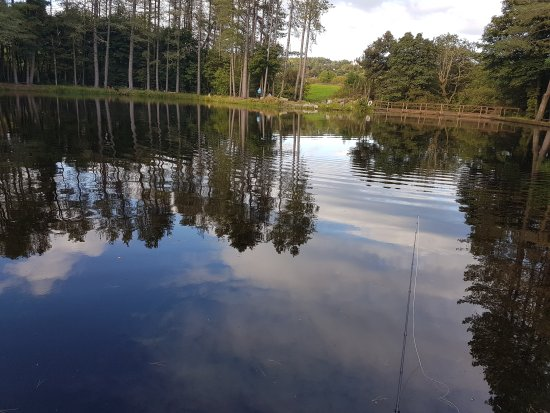 Lawfield Trout Fishery