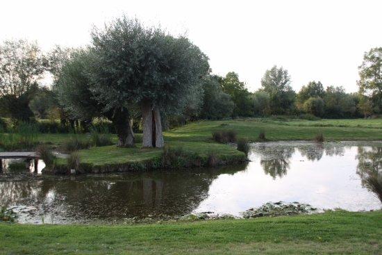 Favieres, France : Pièce d'eau située à côté de certaines chambres
