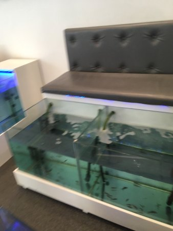 Athens Doctor Fish - Foot Therapy & Day Spa: photo7.jpg