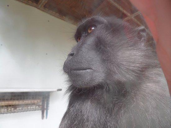 Filby, UK: cheeky monkey....