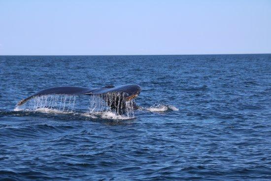 Tiverton, Канада: Diving Humpback