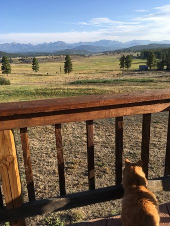 Elkwood Manor Bed & Breakfast : View from the deck (with cat accessory)