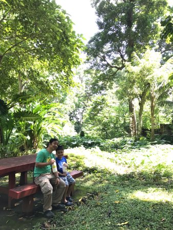 Makiling Botanic Gardens: photo0.jpg