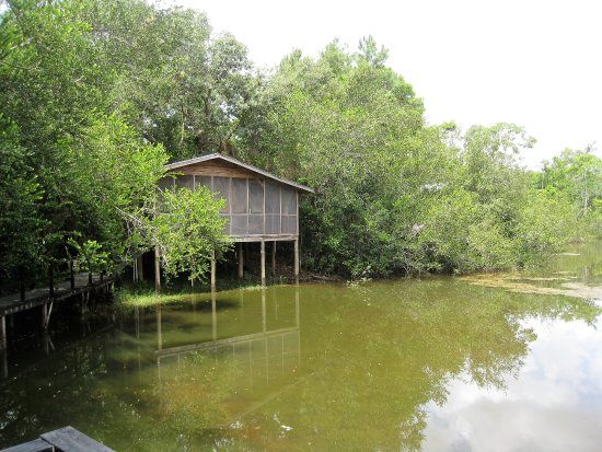 Ladyville, Belize : Pond House 1