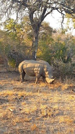 Timbavati Private Nature Reserve, Sør-Afrika: photo1.jpg