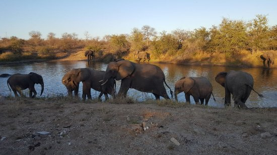Timbavati Private Nature Reserve, Sør-Afrika: photo2.jpg