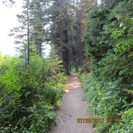 Cameron Lake: The trail