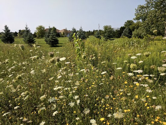 Thamesford, Canadá: Wildflower gardens outside Just For You