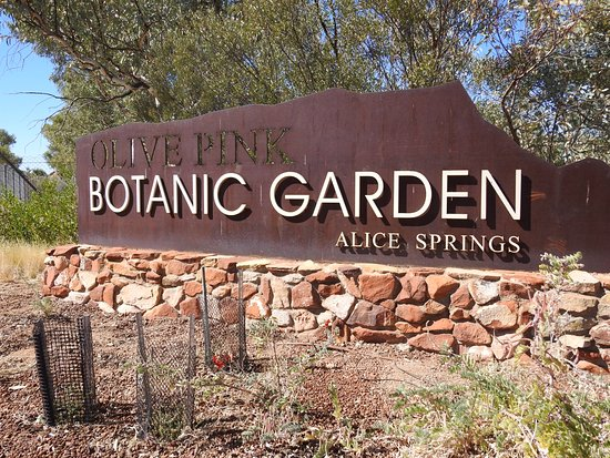 Unknown picture of olive pink botanic garden alice - Olive garden colorado springs co ...