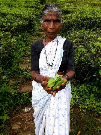 Bluefield Tea Gardens: woman