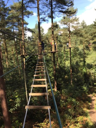 Go Ape Haldon Forest Park: Up in the trees!!