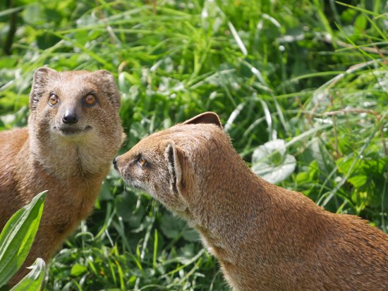 Burford, UK : Cotswold Wildlife Park