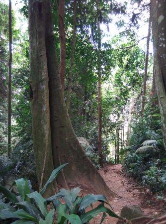Negeri Sembilan, Malasia: Gunung Datuk trail