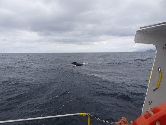 Blasket Islands Eco Marine Tours: photo0.jpg