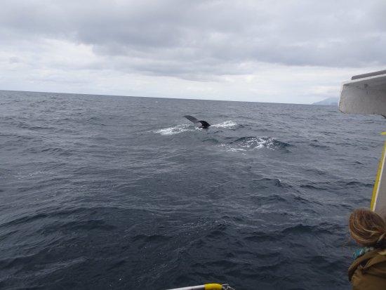 Blasket Islands Eco Marine Tours: photo1.jpg