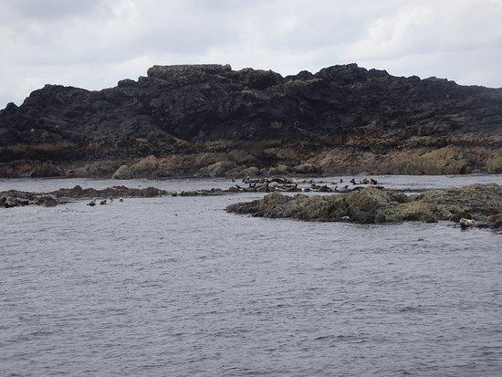 Blasket Islands Eco Marine Tours: photo2.jpg
