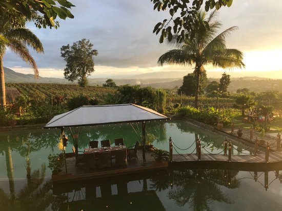 Shan State, Birmanie (Myanmar) : Aythaya Vineyard