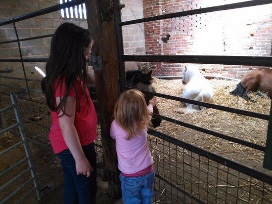 Tanworth in Arden, UK: Barn fun