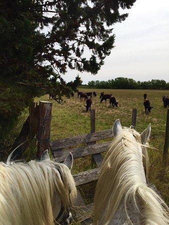 Promenade à cheval, Chez Elise : photo2.jpg