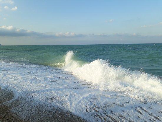 写真Crazy Beach枚